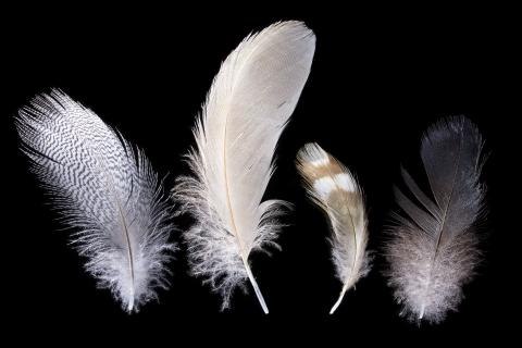 feathers-1427.jpg