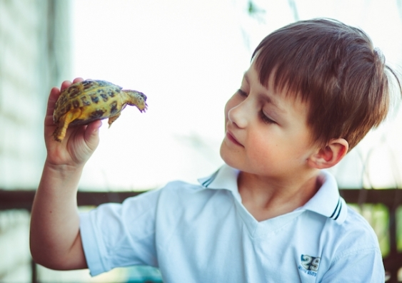 A boy holds a small pet turtle