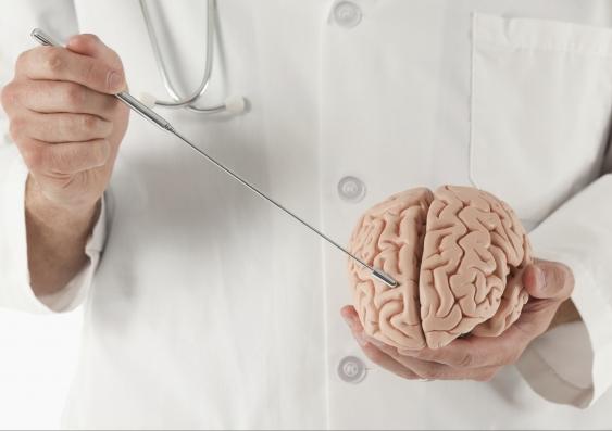 Brain and mental health.jpg