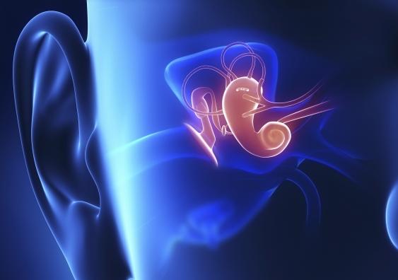 Middle ear.jpg