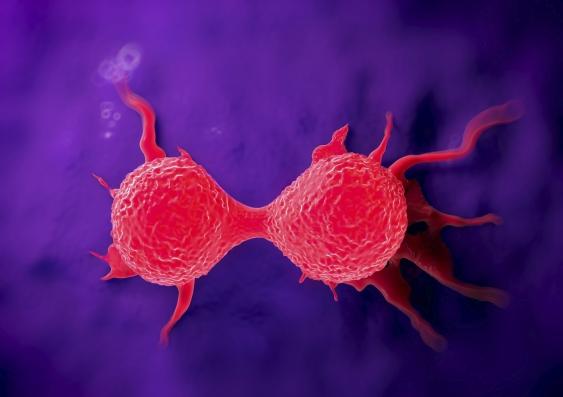 16_dividing_breast_cancer_cell.jpg