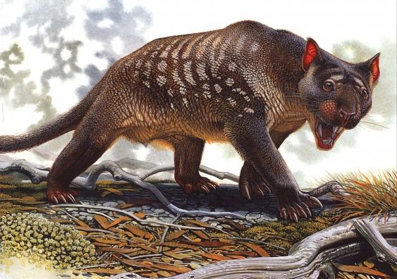181019_marsupiallion.jpg