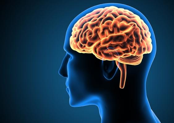 181127_brain.jpg