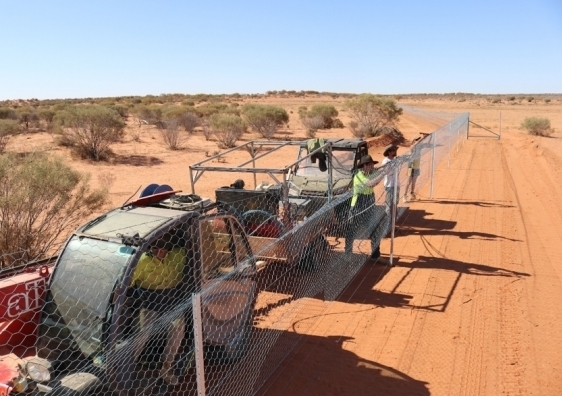 The Wild Deserts team have created a sanctuary for native Australian animals in the Sturt National Park that is completely free of feral animals
