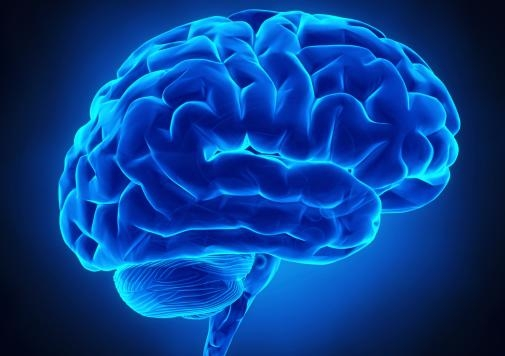 22 brain 1