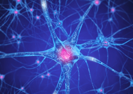 22_brain_neuron.jpg