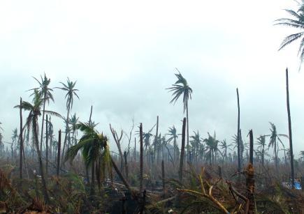 23 typhoon image 0