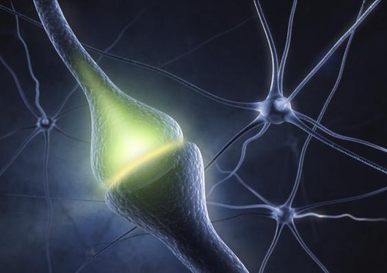 27_synapse.jpg