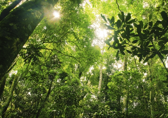 31_deforestation.jpg