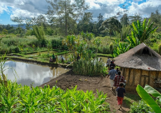 A fish farming project in Papua New Guinea