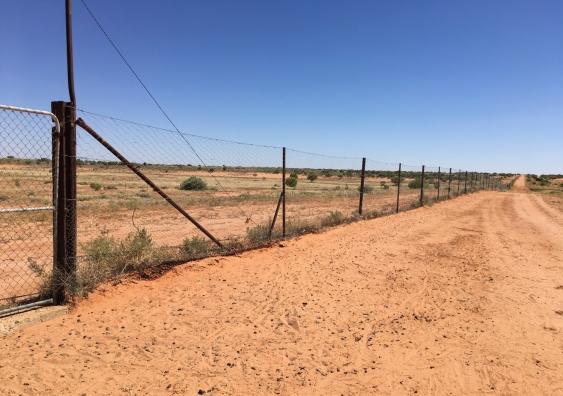 Dingo fence 2