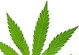 Cannabis inside