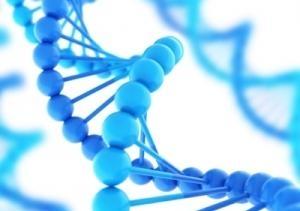 DNA2 1