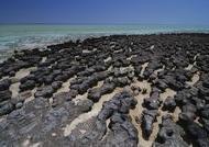 Stromatolites inside