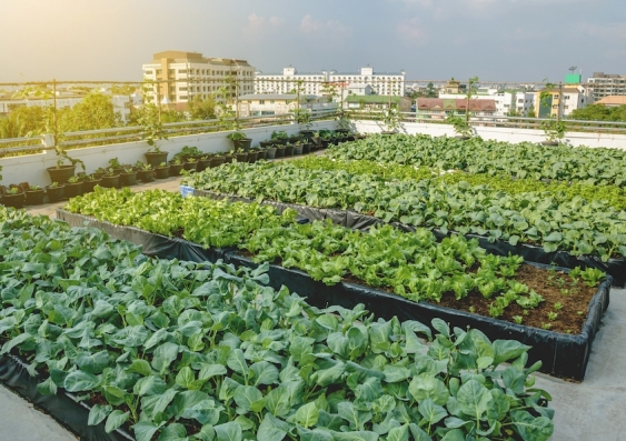 agriculture on rooftop