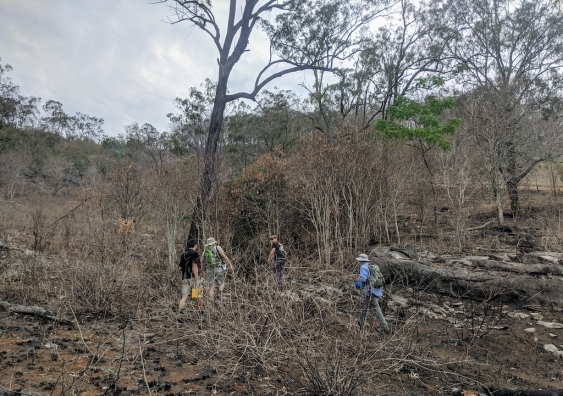 The burnt landscape at Macleay, NSW in November 2019