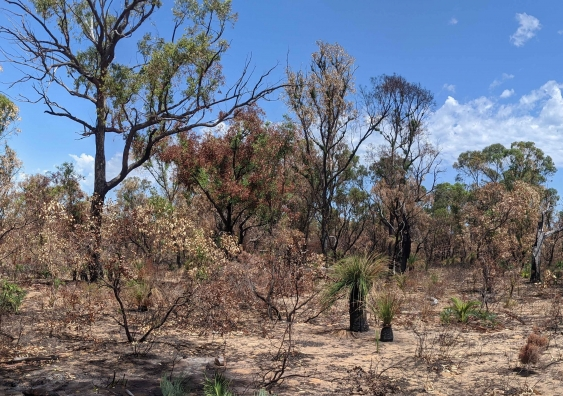 Yanchep National Park WA post-fire in late 2019