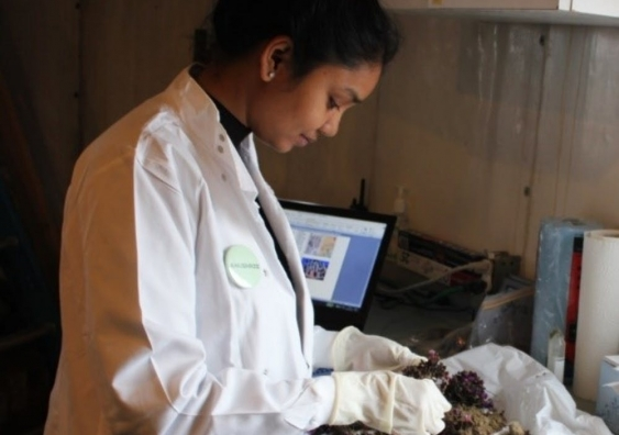 Anushree looking at samples in the lab.