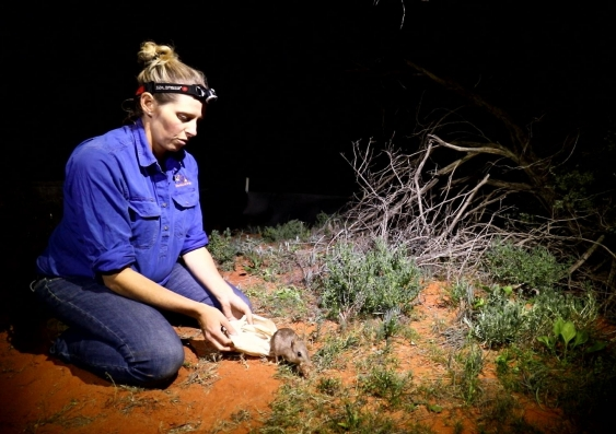 Rebecca West releases a bandicoot into the desert at nighttime