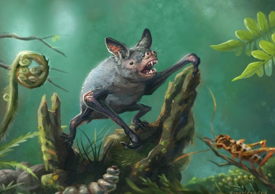 Fossil of giant burrowing bat found in New Zealand