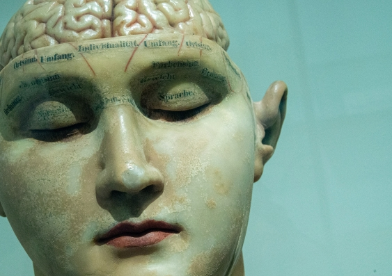Early 20th Century brain model