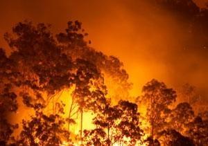 Bushfire cropped
