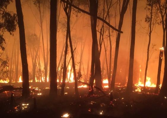 Rebuild after bushfire
