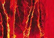 Bushfire web