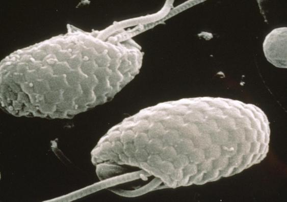 Cryptophytes 1 0