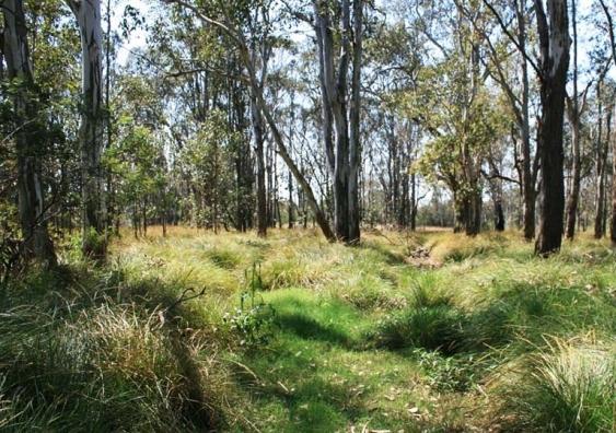 cumberland-plain-woodland.jpg