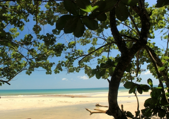Tropical plants under threat from climate change