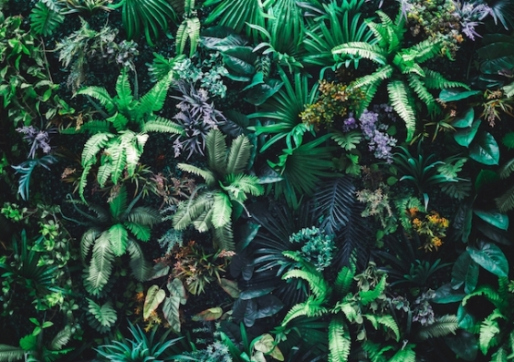 Climate change threat to tropical plants