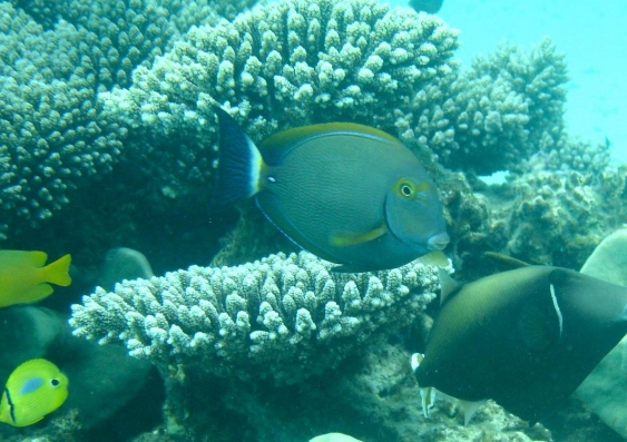 Fish3 1