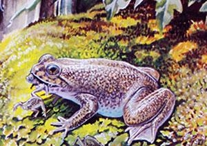 Frog newsroom