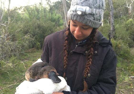Tahneal Hawke holding a platypus