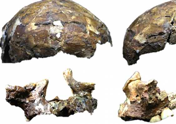 Radiocarbon dating of fossils taken from caves on islands along