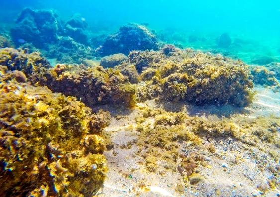 sea microbes