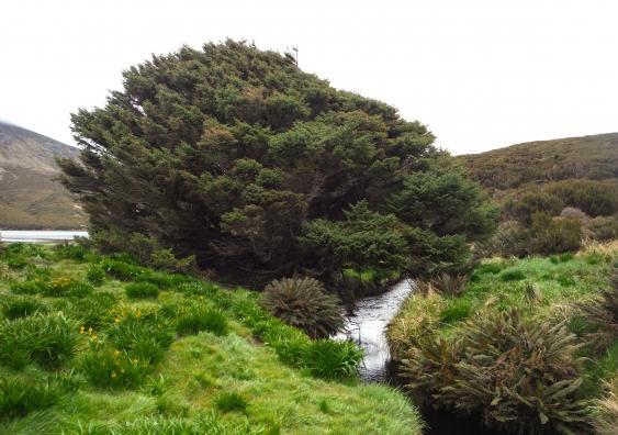loneliest_tree_anthropocene_pavla_fenwick_002.jpg