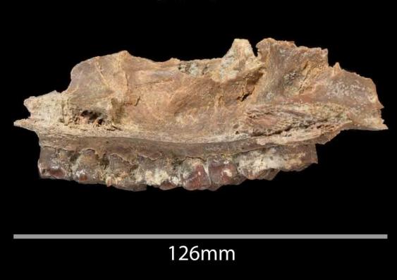mammal_fossil.jpg