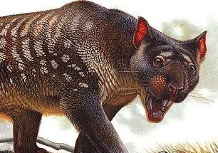 Marsupiallion2