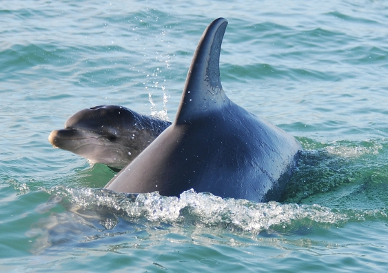 mother_and_calf_lumpy_and_limpet_2012jun29_bb_s2_0043_ed.jpg