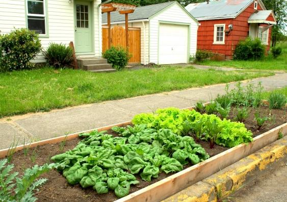 nature strip community garden