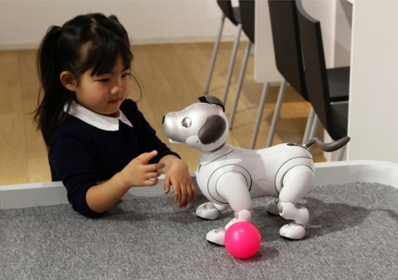 Girl playing with a robotic dog