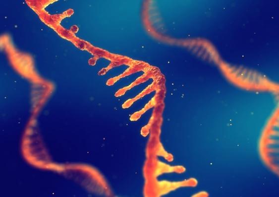 RNA technology
