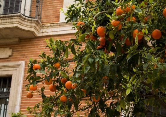 orange tree on the street