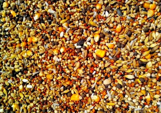 seedsimage.jpg