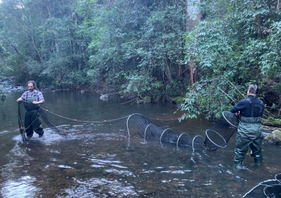 Gilad Bino and Tahneal Hawke setting up nets in a river to catch platypus