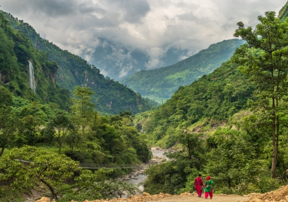 Nepal forest