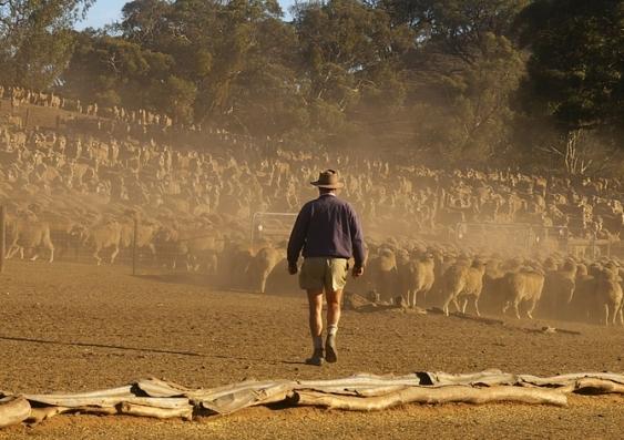 farm drought.jpg
