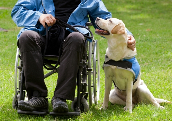 wheelchair user and guide dog